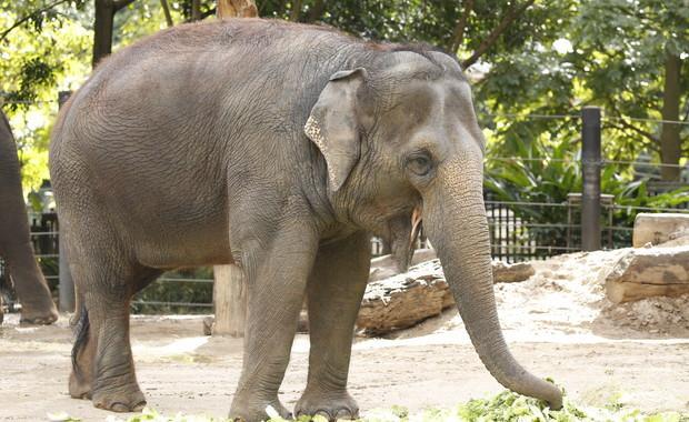 Слон избегал од зоолошка градина на Флорида