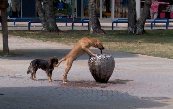 Куманово одвои 760.000 денари за заловување кучиња скитници