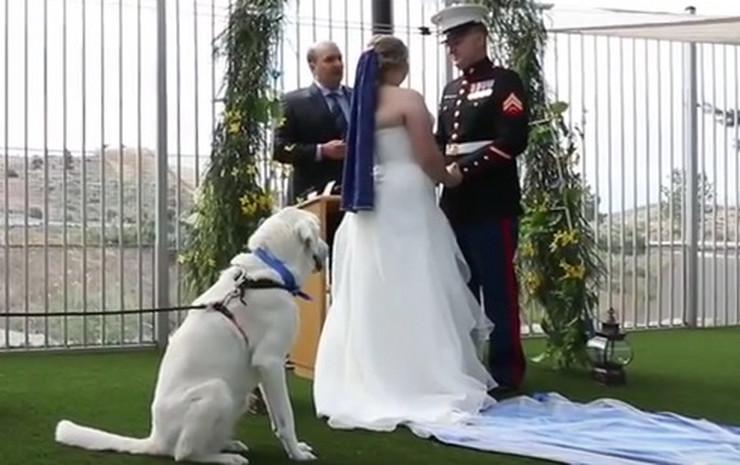 На оваа свадба старосватиците, кумот и добар дел од гостите не се луѓе (ВИДЕО)