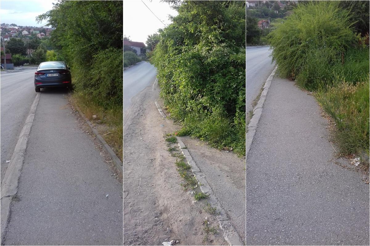 Грмушки ги проголтаа тротоарите на Магаза (ФОТО)