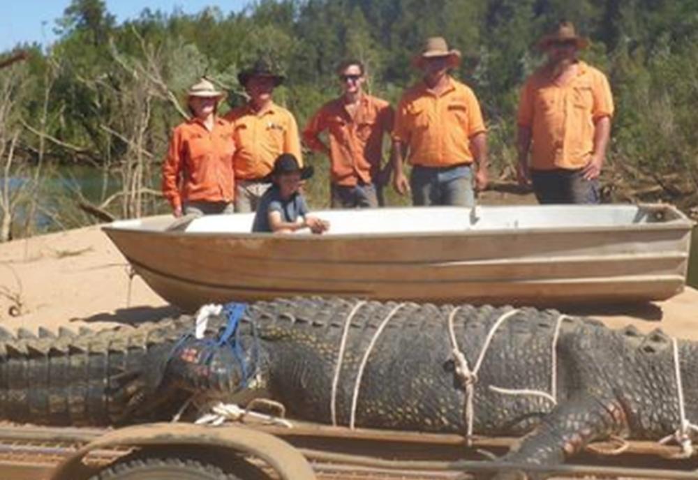 ЅВЕР ОД 600 КИЛОГРАМИ: Уловен најголемиот крокодил во светот (ФОТО)