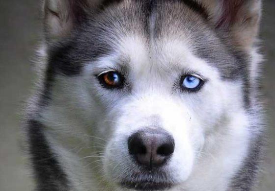 """Популарноста на серијата """"Игра на тронови"""" ги загрози кучињата"""