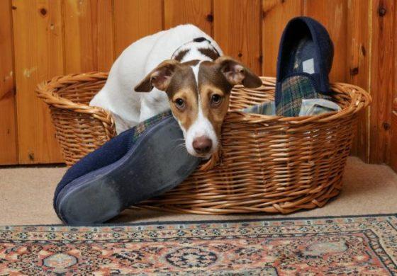 """Зошто кучињата ни """"крадат"""" работи и како тоа да го спречиме?"""