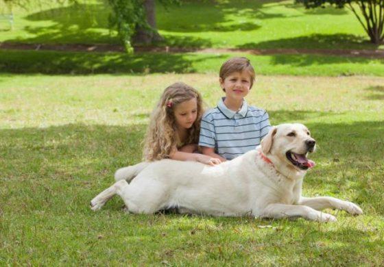 """Внимавајте на вашето куче: Во лето може да ја """"закачи"""" оваа болест"""