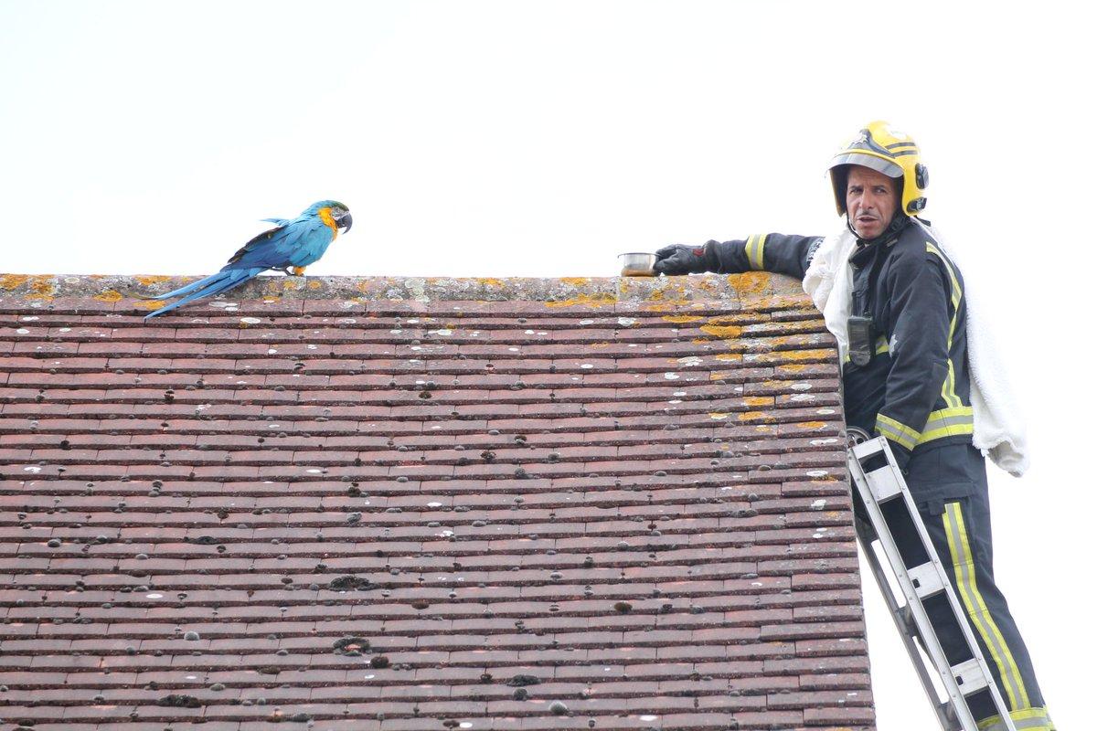 Се обиде да симне папагал од кровот, но тој не му остана должен (ВИДЕО)