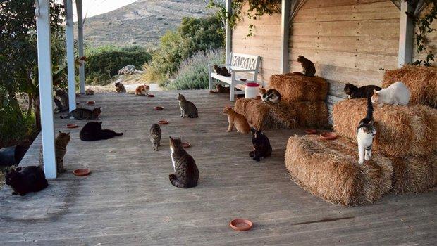 Работата од соништата се наоѓа на еден грчки остров: Услов е да ги сакате мачките (ФОТО)
