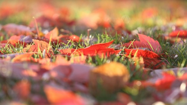 Зошто не треба да ги собирате паднатите есенски лисја?