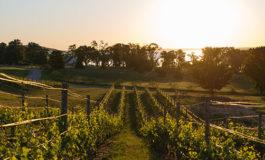 Кумановското грозје некогаш се извезувало во Австрија