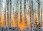 Фински фотограф докажува дека магичните шуми сепак постојат (ФОТО)
