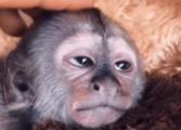И мајмуни знаев да уживав у живот (ВИДЕО)