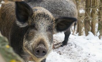 Ловџии од липковскиот регион во акција за прихрана на дивечот