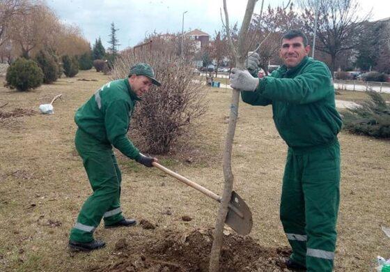 """ЈП """"Чистота и зеленило"""" засади дрвја на повеќе локации во Куманово (ФОТО)"""
