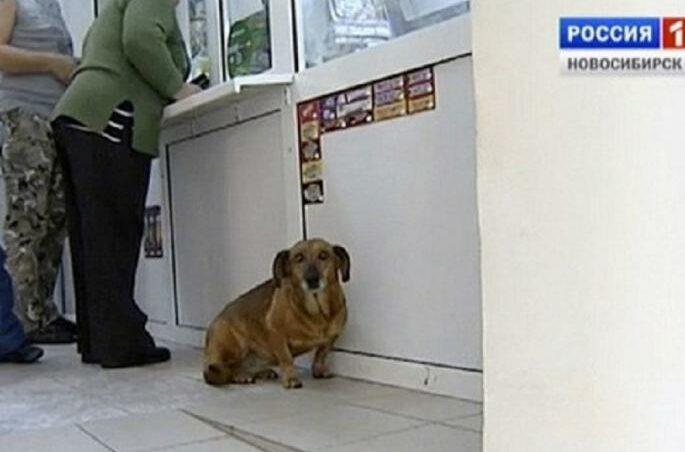 Куче година дена пред болница го чека својот починат сопственик (ФОТО)