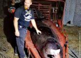 Кит угина откако проголтал над 40 килограми пластика
