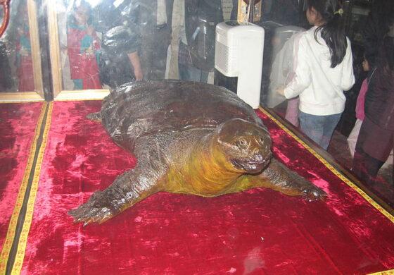 Угина редок вид желка, една од четирите примероци во светот (ВИДЕО)