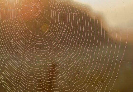 Девет совети за трајно отстранување на пајажината