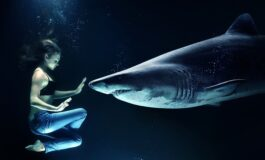 АВСТРАЛИЈА НА НОЗЕ: Непознато суштество откинало глава на џиновски кит (ВИДЕО)