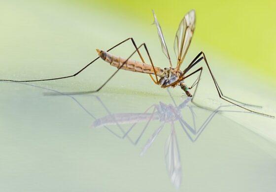 Во петок прскање против комарци во Куманово