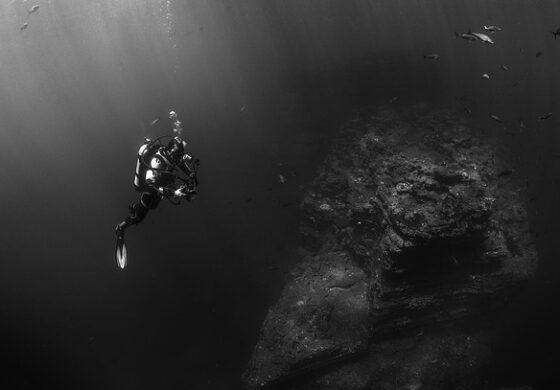 Радиоактивни животни откриени 11 километри под водата