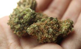 23-годишен кумановец ќе одговара за поседување марихуана