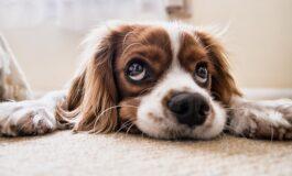 Како да откриете дали вашиот миленик е во депресија?