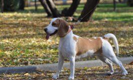 Како да знаете дали е претопло за прошетката на вашиот миленик?