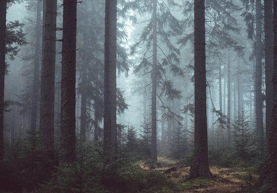 Влегол во шума со најосновните предмети, не излегол цели 27 години, додека не го уапсиле