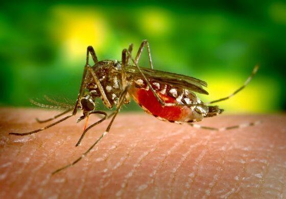 Зошто се јавува чешање при каснување од комарец?