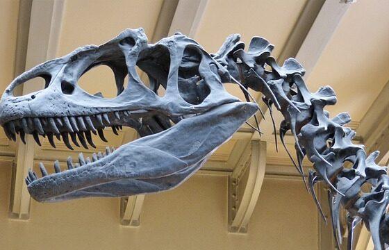 Студент откри череп од диносаурус стар 65 милиони години (ВИДЕО)
