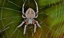 Илјадници пајаци секојдневно ја окупираат оваа канта за смет (ВИДЕО)