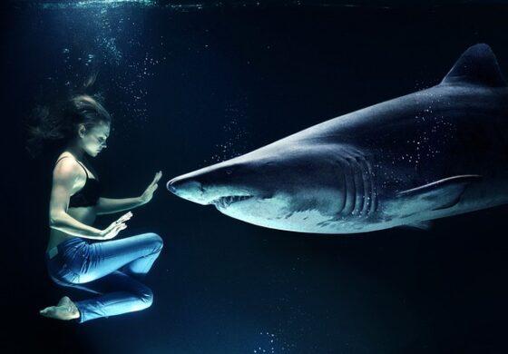 Дали ајкулите навистина ги привлекува човековата крв? (ВИДЕО)