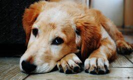 Дали љубовта кон кучињата е наследна?