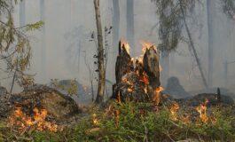 Пожар во селото Орашац два дена ги мачи кумановските пожарникари