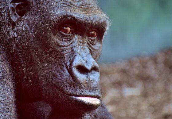 Исчезнале 50 отсто од животинската популација, а се поради човечки фактор