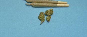 Кај 18-годишен кумановец полицијата пронашла марихуана