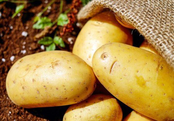 Грешки кои ги правиме при подготовка на компирот