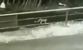 Бебето им испаднало од автомобилот, додека да сфатат дека го нема се случило нешто неверојтно (ВИДЕО)