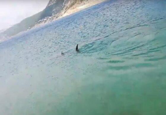 Паника во Хрватска: Морско чудовиште снимено близу крајбрежјето (ВИДЕО)
