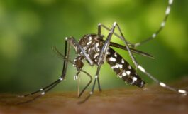 Научниците против маларија се борат со стерилизирани комарци