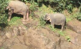Шест слонови паднаа во провалија, во обид да спасат слонче
