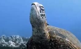 Снимка која го воодушеви светот: Дали знаете како спијат желките? (ВИДЕО)