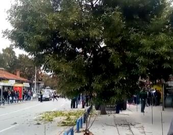 Граѓаните реагираат на сеча на дрвја во центарот на Куманово