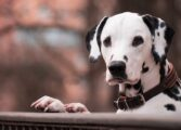 Зошто кучињата прават одредени работи кои нам не ни се јасни?