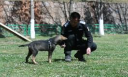 Клонирани суперкучиња во Кина, наменети за полицијата (ФОТО)