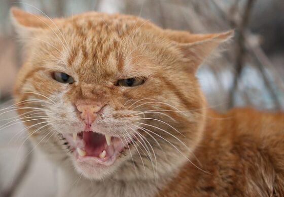 Пијан Русин нападнал полицаец – му фрлил мачка врз лицето