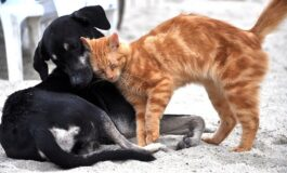 Ако се прашувавте дали е попаметна мачката или кучето, еве го одговорот