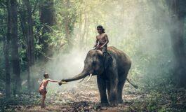 НОВИ ЗАБРАНИ: Омилената активност на туристите во Азија станува минато