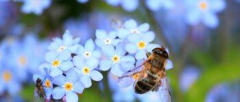 """Во тек е """"инсект апокалипса"""" која може да го погоди сиот живот на Земјата"""
