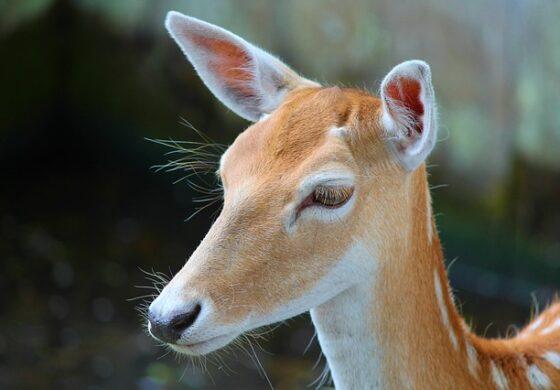 Редок вид цицач виден повторно по 30 години (ФОТО)