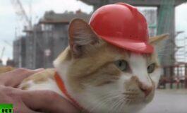 Мачор е главен инспектор за мостови во Русија, а му верува дури и Путин (ВИДЕО)